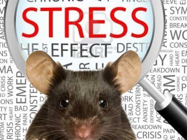Стресс оказывает воздействие на память человека.