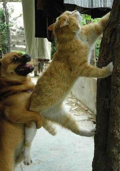 Название: funny-teamwork-cat-dog.jpg Просмотров: 849  Размер: 41.4 Кб