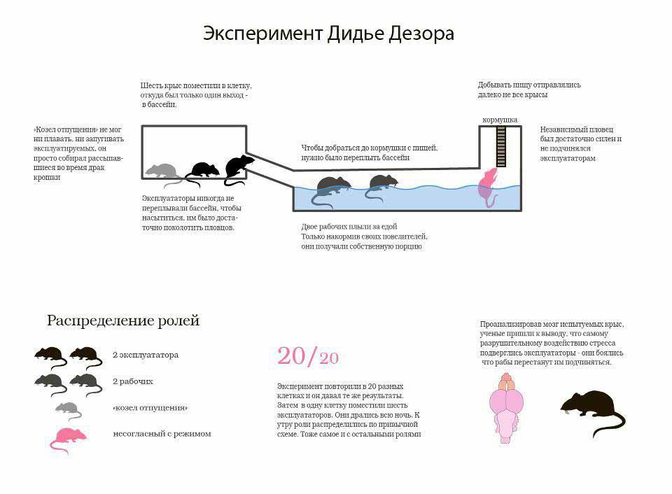 Нажмите на изображение для увеличения.  Название:psychology of rats.jpg Просмотров:1815 Размер:66.3 Кб ID:472
